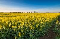 INSUMOS AGRICOLAS - Exposición de Insumos agricolas que tu cultivo, empresa, huerta urbana o jardín necesitan. Contacta directamente a los proveedores de insumos agricolas.