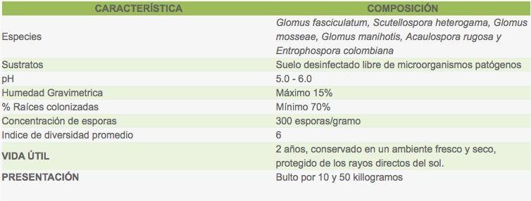 micorizas-caracteristicas.jpg?1586547753