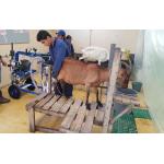 Equipo de Ordeño Portátil SUPERPULSE CABRAS en  Agrofertas®