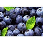 Arándanos Azules Frescos en  Agrofertas®