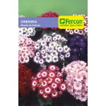 Cineraria Mezcla de Colores en  Agrofertas®