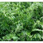 Vicia en  Agrofertas®