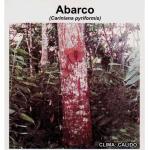 Desde Agrofertas entras en contacto con El Semillero para  cotizar o comprar Abarco (Semillas)