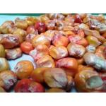Maiz Porva (Semilla) en  Agrofertas®