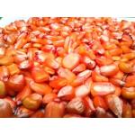 Maíz V-305 Amarillo en  Agrofertas®