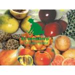 Aguacate Semillas vende  El Semillero