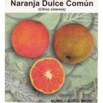 Naranja Común Semillas en  Agrofertas®