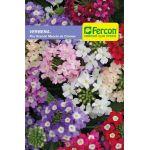 Verbena Flor Grande en  Agrofertas®