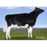 Semen Holstein Suizo Graduate en  Agrofertas®