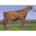 Semen Toro Holstein Suizos Bigstar en  Agrofertas®