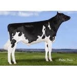 Semen Toro Holstein Suizo Buffalo en  Agrofertas®