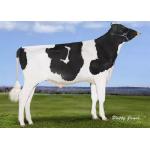 Semen Toros Holstein Suizos Classic en  Agrofertas®