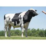 Semen Toros Holstein Suizo Fabulous en  Agrofertas®