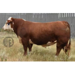 Hereford Bolt vende  Semex Colombia LTDA