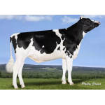 Holstein  Lighthouse vende  Semex Colombia LTDA