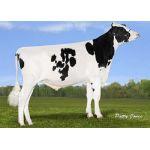 Semen Toro Holstein Suizo Orion en  Agrofertas®