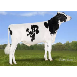 Holstein Orion vende  Semex Colombia LTDA