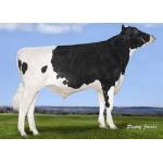 Semen Toros Holstein Suizos Prospectus en  Agrofertas®
