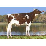 Semen Toro Holstein Suizo Redstream-ET en  Agrofertas®
