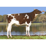 Holstein Redstream-ET vende  Semex Colombia LTDA