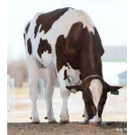 Holstein Russ-PP-Red vende  Semex Colombia LTDA