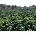 Asesoría en Créditos Agropecuarios vende  Renthabilidad SAS