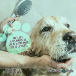 Servicio de Peluquería Canina y Felina vende  Mascotas Style