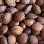 Semillas vende  Cooperativa SachaAntioquia Multiactiva