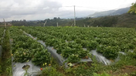Servicio de Instalación en  Agrofertas®