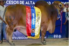 Semex Beef Brahman Rojo El Tesoro Tambor 397/35 en  Agrofertas®
