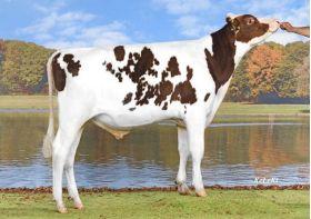 Semen Toro Holstein Suizo Bertaggia-ET en  Agrofertas®