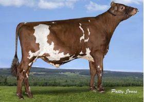 Semen Toro Holstein Suizo Bigtime en  Agrofertas®