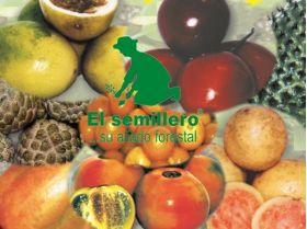 Aguacate Semillas en  Agrofertas®