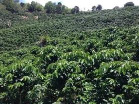 Asesoría en Créditos Agropecuarios en  Agrofertas®
