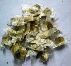 Guayacán Amarillo en  Agrofertas®
