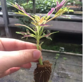 Medio de Propagación Vegetal Ultrafoam en  Agrofertas®