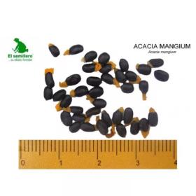 Acacia Mangium Fuente Seleccionada (Semilla) en  Agrofertas®