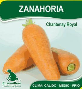Zanahoria Chantenay Royal en  Agrofertas®