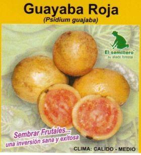 Guayaba Roja Semillas en  Agrofertas®