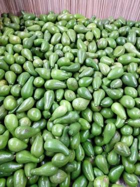 Venta de Aguacate Criollo en  Agrofertas®