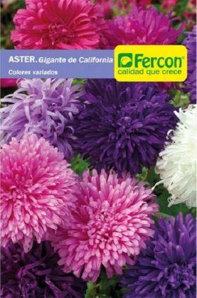 Aster Gigante de california Aster Anual en  Agrofertas®