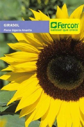 Girasol Flor Gigante en  Agrofertas®
