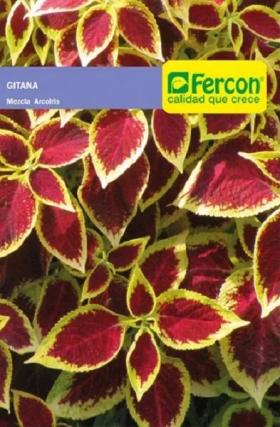 Gitana Mezcla de Arcoiris en  Agrofertas®