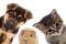 ACCESORIOS PARA MASCOTAS -  ANIMAL PRODUCTION AND PETS -  ANIMAL PRODUCTION AND PETS / ACCESORIOS PARA MASCOTAS